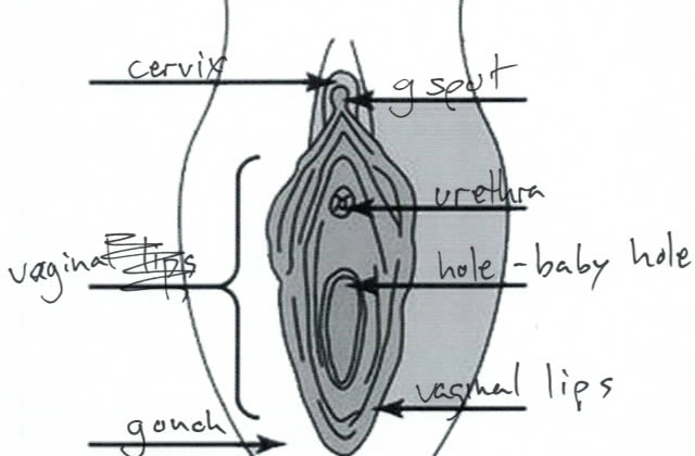 Des hommes dessinent des vulves… et c'est globalement raté