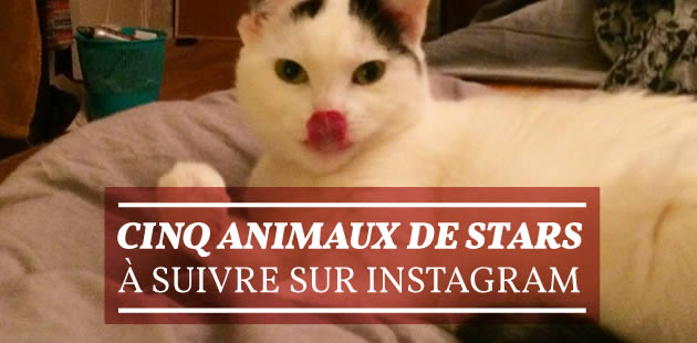 big-5-animaux-stars-instagram