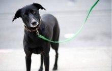 Des chiens qui courent après leur propre laisse : la compilation