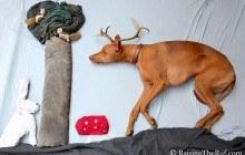 Rufus, le chien qui vit plein d'aventures en dormant grâce à ses maîtres