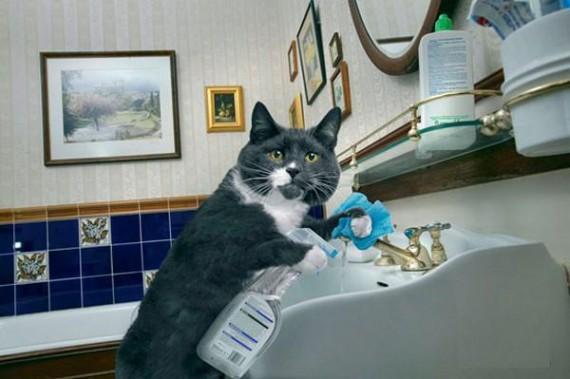 un chat qui fait le ménage