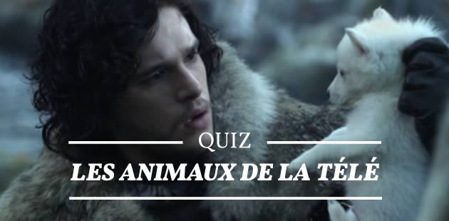 Quiz – Les animaux de la télé