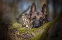 Un chien et une chouette sont super copains