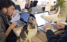 Poopy Cat dévoile le quotidien (plein de chats) de ses bureaux