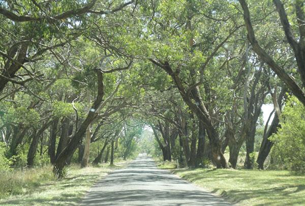 australie-road-foret