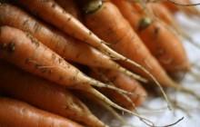 La carotte en quatre recettes originales