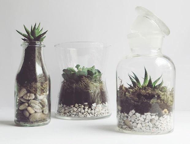 Diy_terrarium_cactus