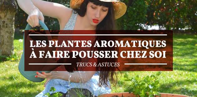 big-plantes-aromatiques
