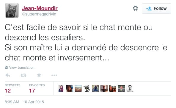 chat-escaliers-moundir