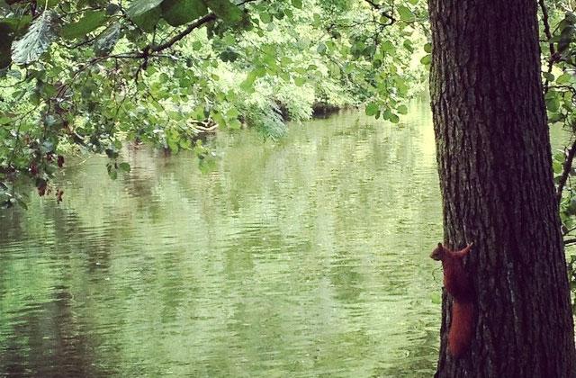 Copenhague, des écureuils roux à la petite sirène en vélo — Carte postale du Danemark