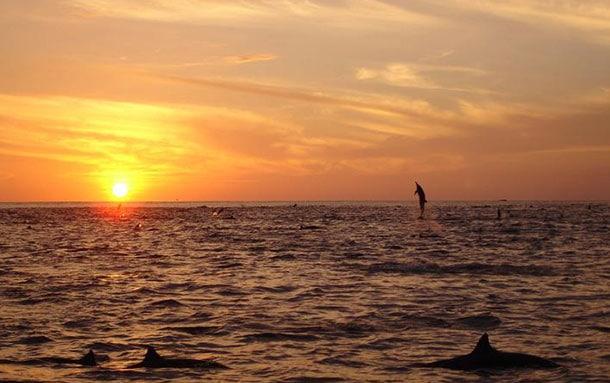 ode-soleil-dauphin