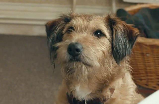 « Absolutely Anything », un film décalé avec Simon Pegg, a une bande-annonce !