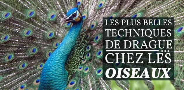 big-techniques-drague-oiseaux