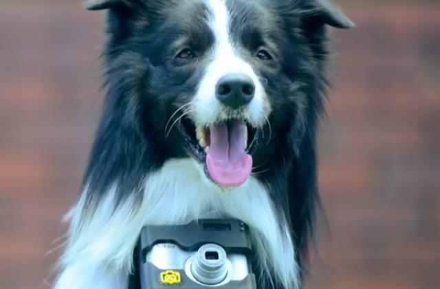 Un chien prend des photos de ce qui l'enthousiasme pour Nikon