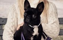 Le chien de Lady Gaga, Asia, devient… égérie d'une marque de sacs