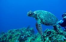 Le plastique, bourreau de nos océans pollués