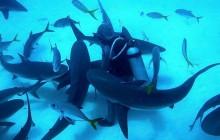 Spécial océan et marine — Les premières femmes qui…