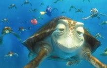 La Grande Barrière de corail, vue d'une tortue