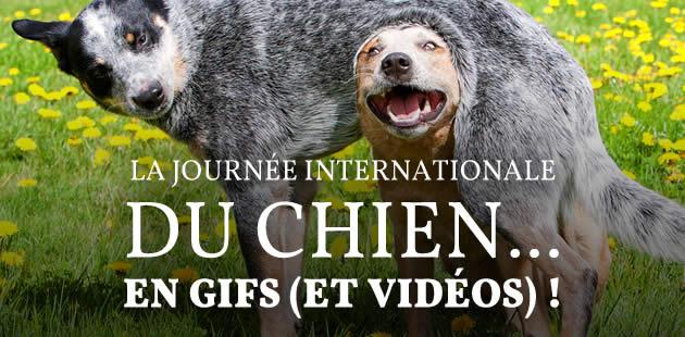 La Journée Internationale du Chien… en gifs (et vidéos)!