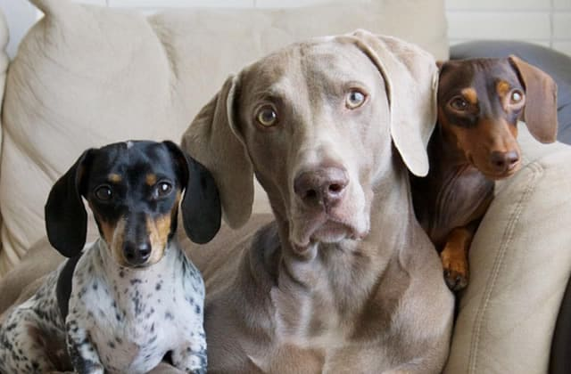 Sélection de comptes Instagram de chiens