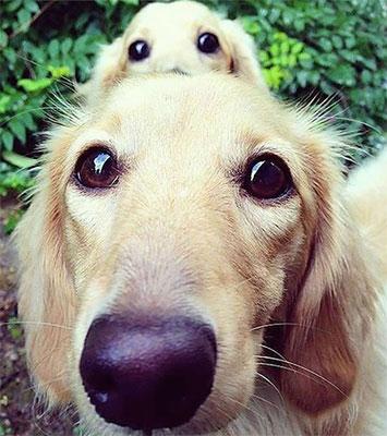 trouvailles-chiens