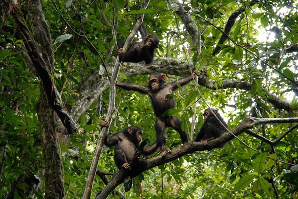 amandine-primatologue-3