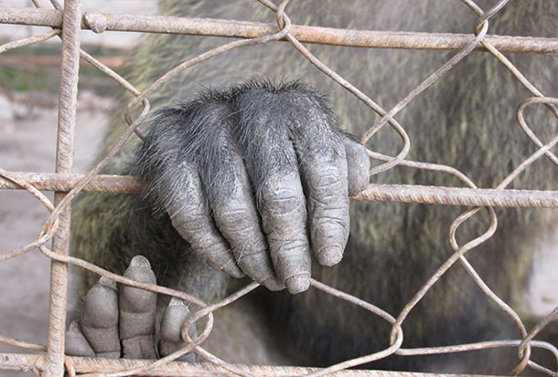 amandine-primatologue-4