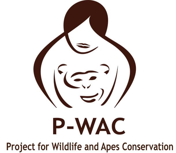 amandine-primatologue-p-wac