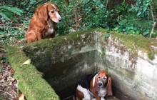 L'amitié entre chiens la plus adorable de la Terre