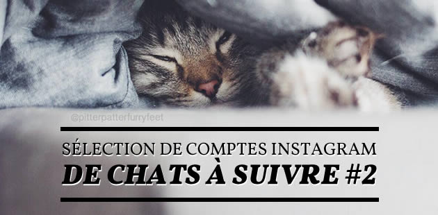 big-comptes-instagram-chats-2