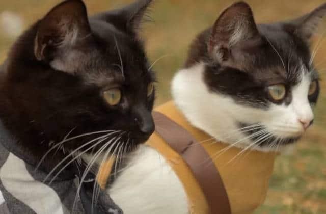 Des chats qui poutrent des zombies, la vidéo badass du jour