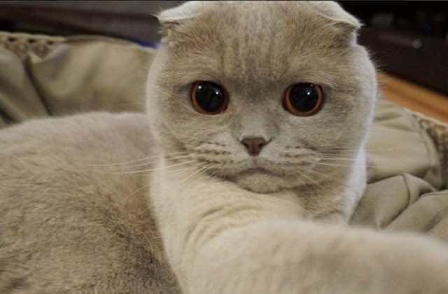 Sélection de comptes Instagram de chats (un peu zozos) à suivre de toute urgence