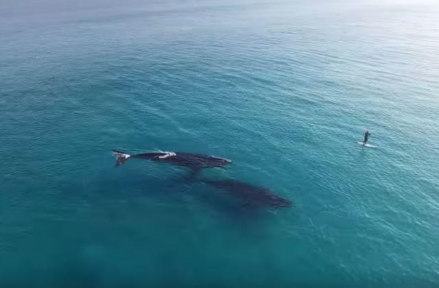 Deux baleines et un paddle, la rencontre hallucinante