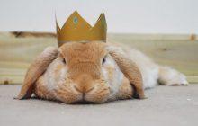 C'est la Journée du Lapin!