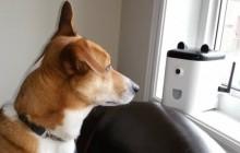 PetBot, la nounou pour chien futuriste