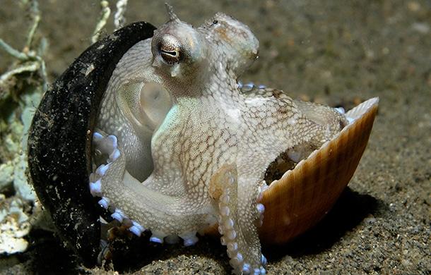 poulpe-kraken-2