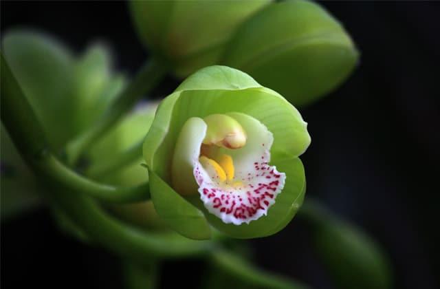 Comment présenter vos plantes de façon originale ?