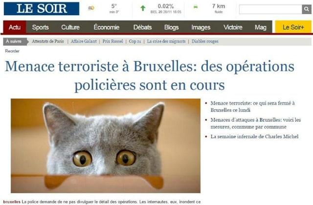 Le #BrusselsLockdown couvre l'Internet de chatons pour préserver les opérations anti-terroristes