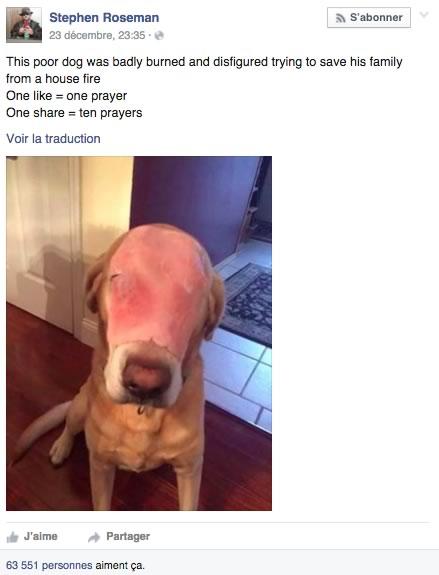 chien jambon