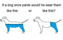 Le nouveau dilemme du web : comment un chien porterait-il un pantalon ?