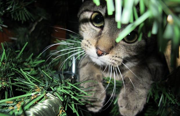 sapin-noel-chat-peur