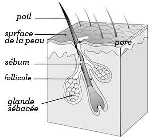 illustration-pores