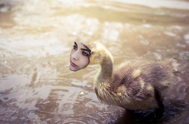 « Le Vilain Petit Canard » raconté par Marion Seclin