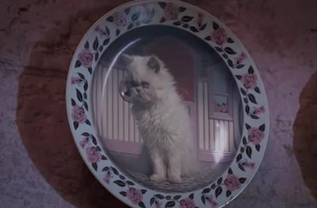 Les chatons du bureau d'Ombrage, la mignonnerie Harry Potter du jour