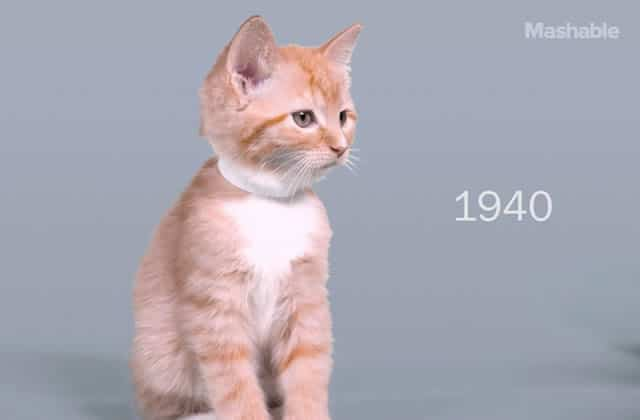 « 100 Years of Beauty » des chatons, par : un chaton (roux)
