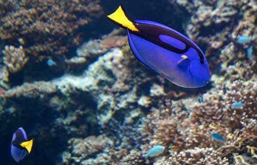 dory-poisson-extinction2
