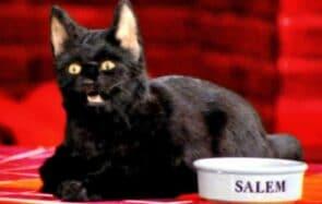 Au secours, je crois que ma chatte est maudite