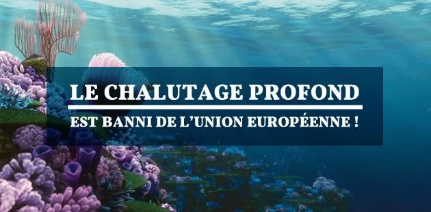 Le chalutage profond est banni de l'Union Européenne!