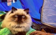 Des chats au camping, l'Instagram le plus pipou de tous les internets