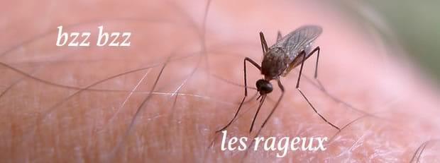 moustique-enflure